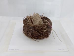 Libro nido - Elisabetta Gut